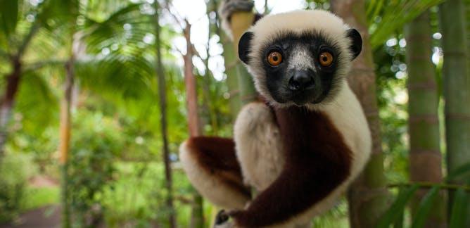 Weird and Wonderful Animal Conservation | Charity Branding Brief